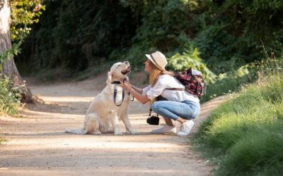 Why HempWorx CBD Dog Treats?
