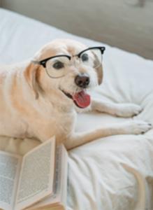 Researching Dog Cbd